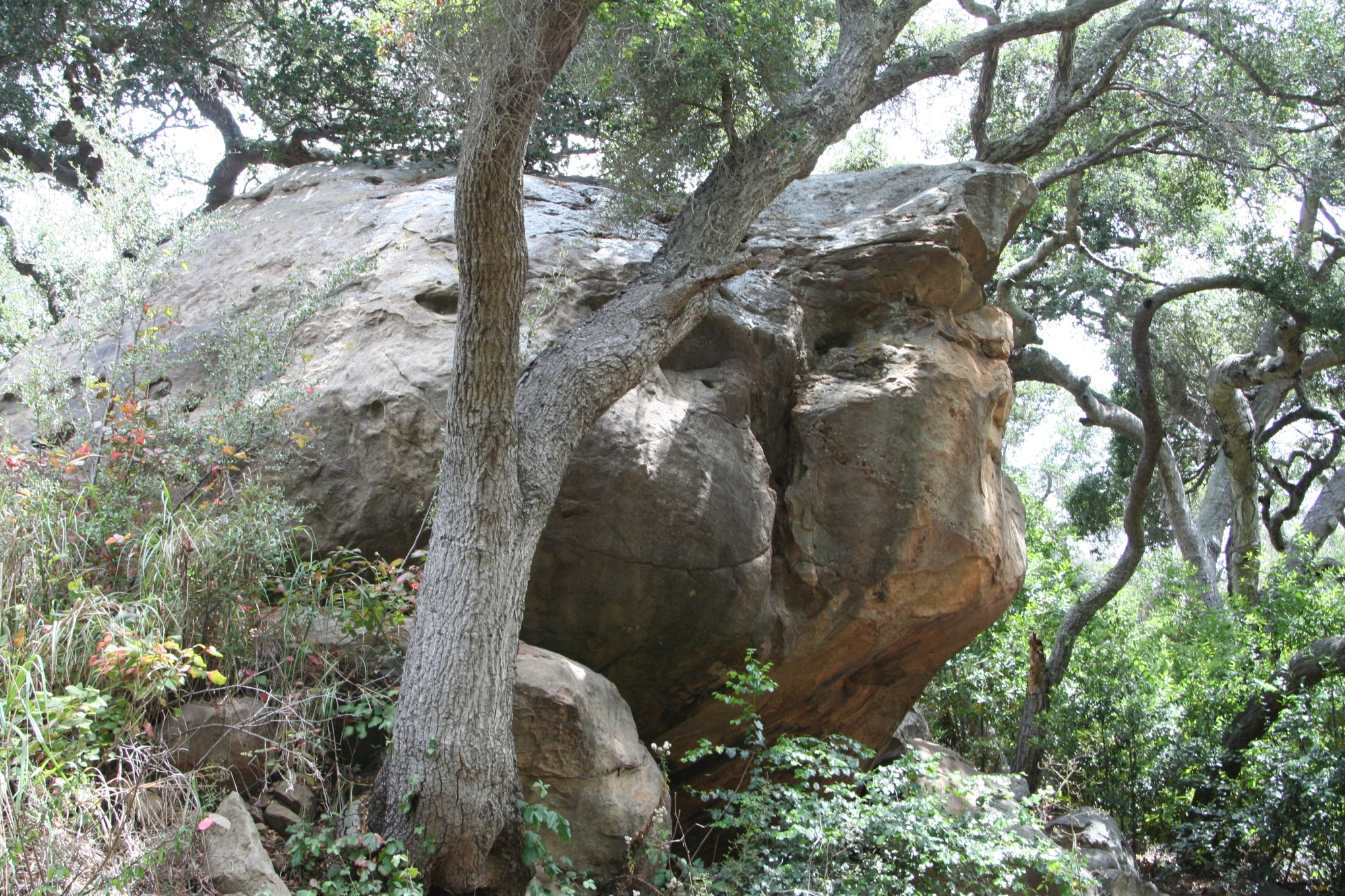 big rock with tree