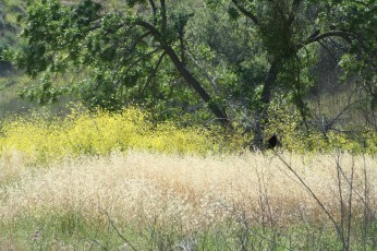 dry grass more